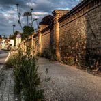 """""""im Fokus"""" Natur in der Stadt"""