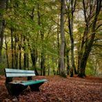 """""""im Fokus"""" typisch Herbst"""