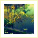 Im Fokus...Gelb