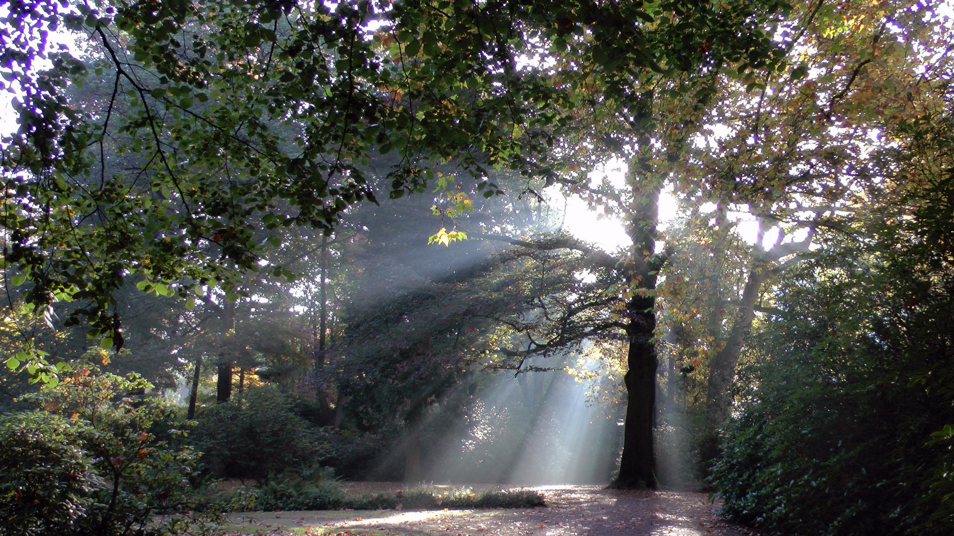 Im Forstgarten