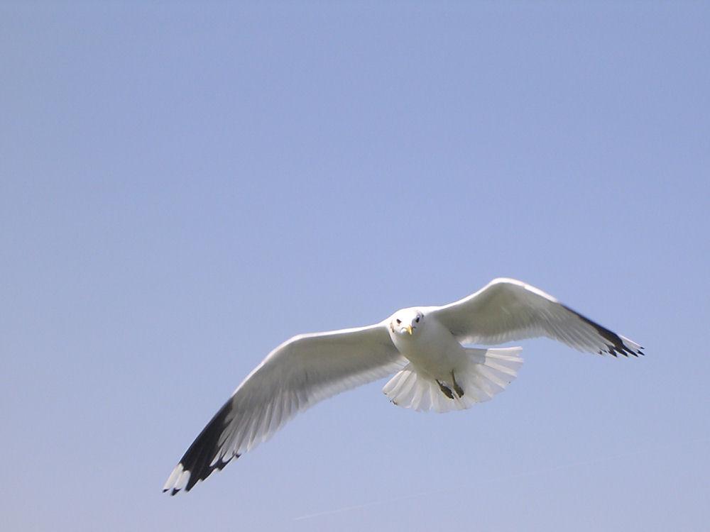 Im freien Flug