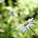 Im Frühling ......
