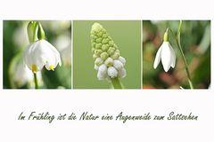 im Frühling...