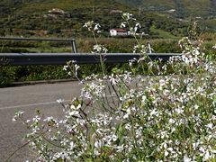Im Frühling die Straße entlang  /  Lungo la strada in primavera (11)