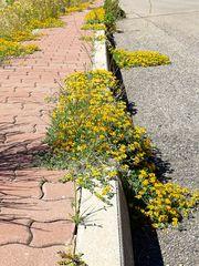 Im Frühling die Straße entlang  / Lungo la strada in primavera (15)
