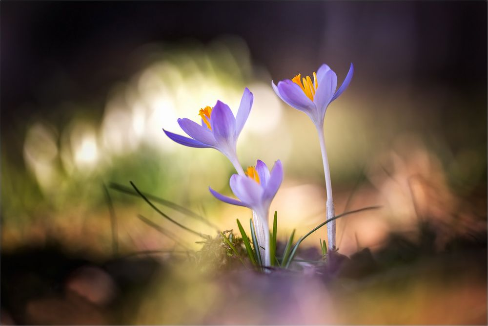 Im Frühlings Licht