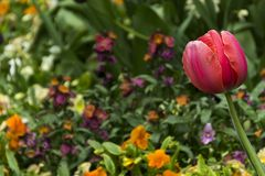 Im Frühlingsgarten