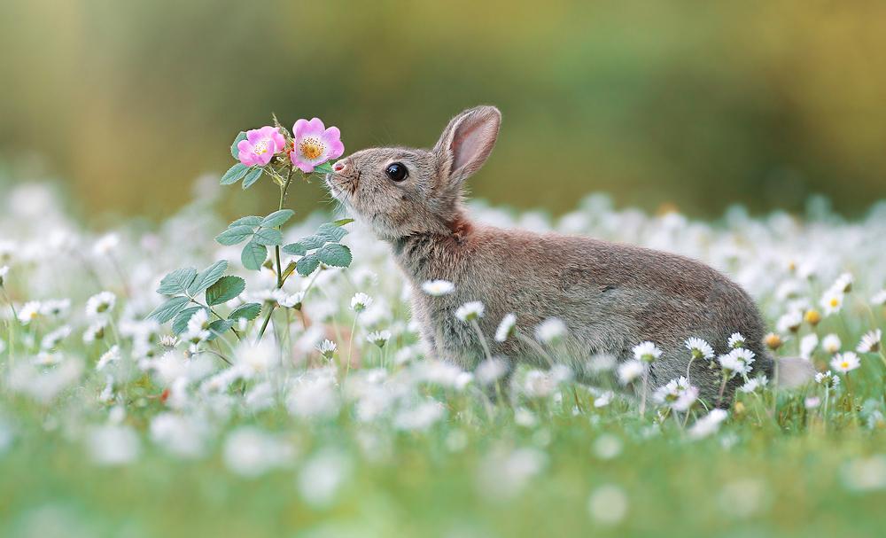 Im Gänseblümchenmeer