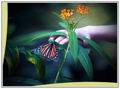 Im Garten 20.Schmetterlingshaus
