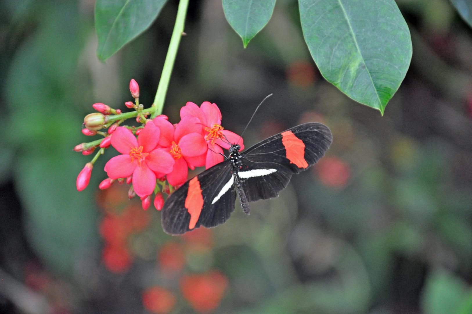 Im Garten der Schmetterlinge 2
