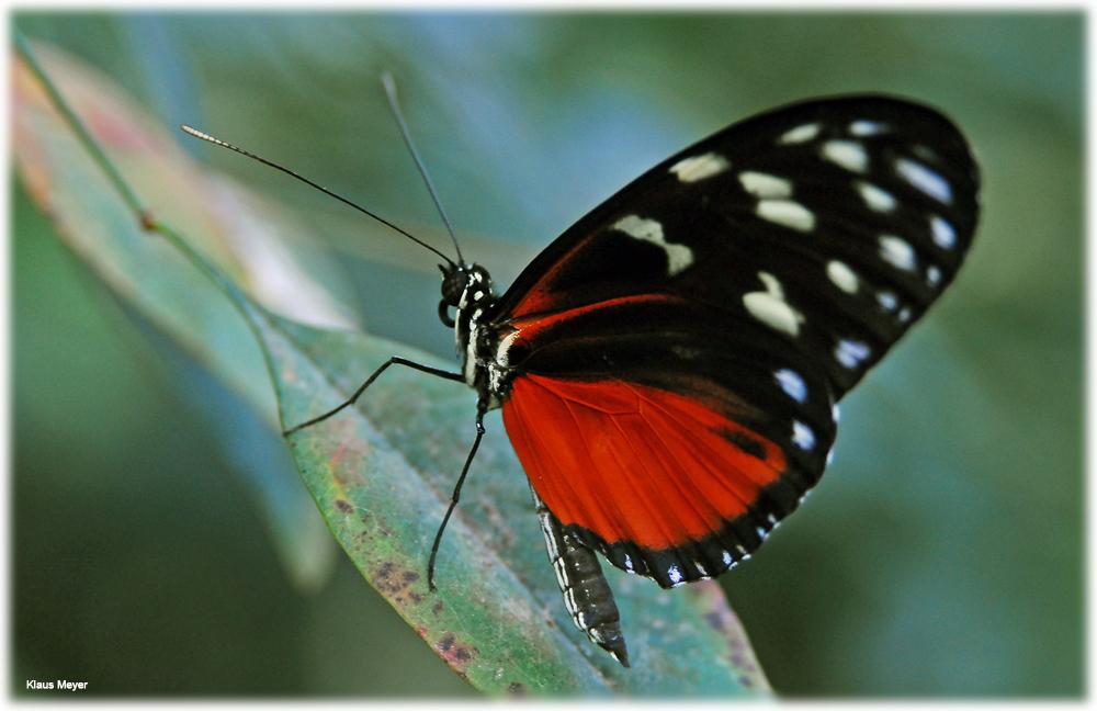 Im Garten der Schmetterlinge 3