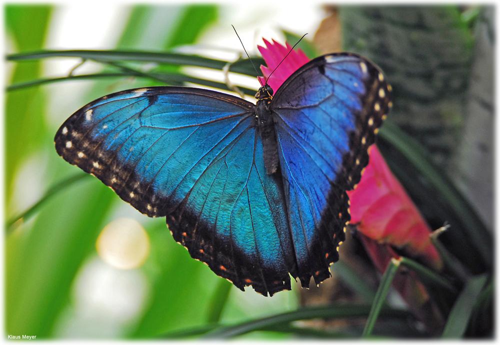 Im Garten der Schmetterlinge 6