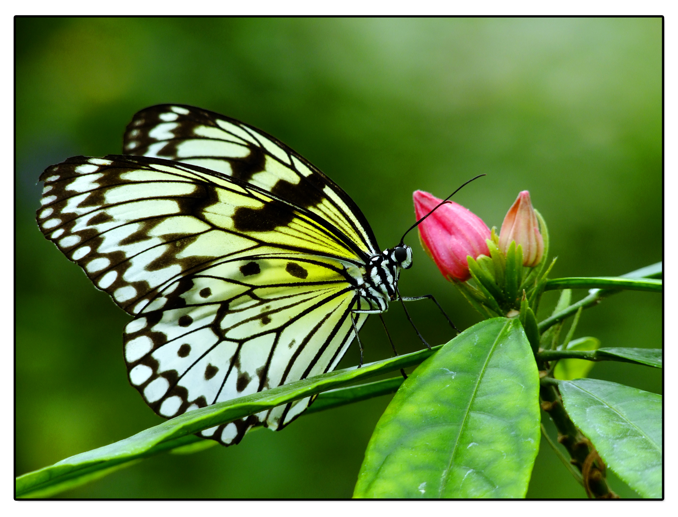 Im Garten der Schmetterlinge