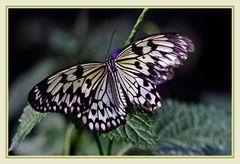 Im Garten  mit einem  Schmetterling