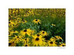 - im Garten vom Maler Emil Nolde -