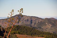 Im Gebirge in Gran Canaria
