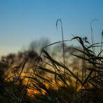 Im Gegenlicht der Abendsonne