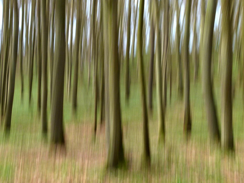 Im Geisterwald...