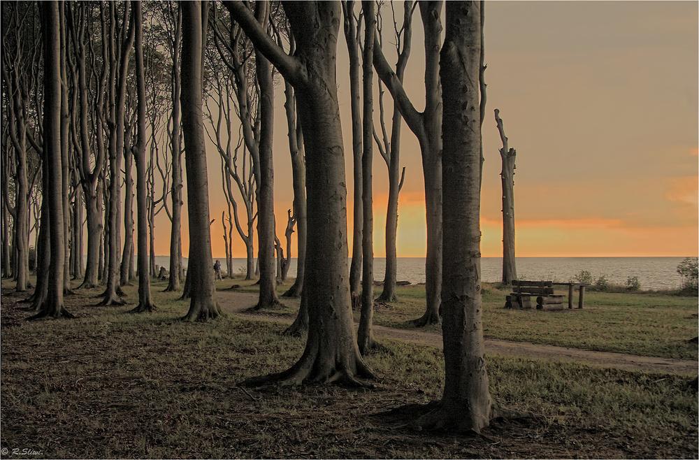 Im Geisterwald von Nienhagen
