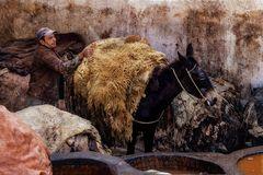 Im Gerberviertel wird ein Esel beladen