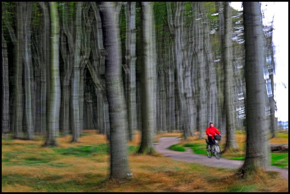 Im Gespensterwald...