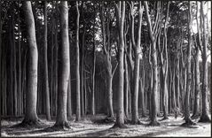 Im Gespensterwald ...