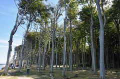 Im Gespensterwald von Nienhagen