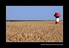 im Getreidemeer