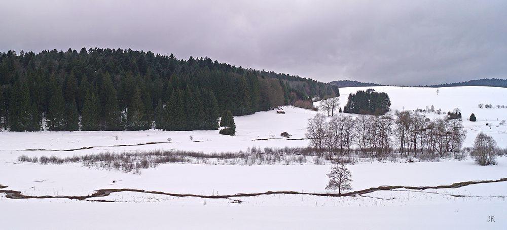 Im Giersbacher Moor (Hotzenwald)