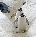 Antarktis+Falklands
