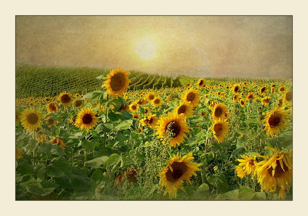 - Im Gold der Abendsonne -