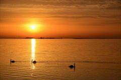 im goldenen Morgenlicht...
