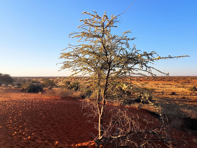 im Gondwana Kalahari Park