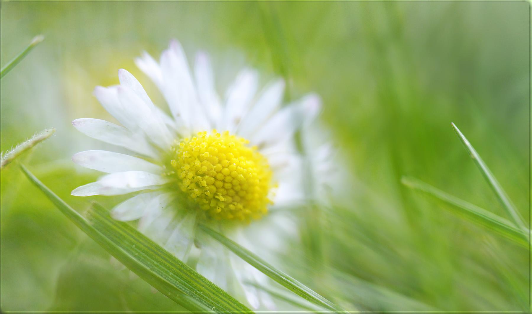 im gras liegen ...