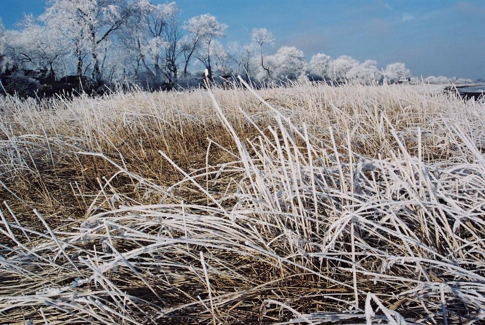Im Griff des Winters