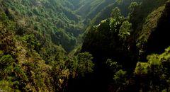 Im grünen Dschungel......