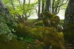 Im grünen Wald
