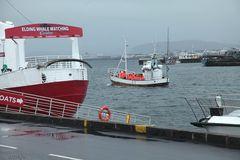Im Hafen von Reykjavík: Auslaufen zum Whalewatching