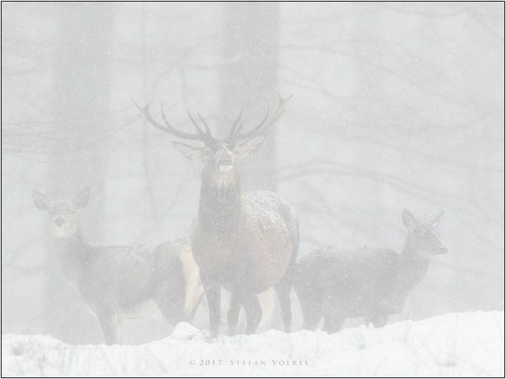 Im heftigen Schneetreiben