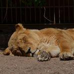Im Heidelberger Zoo