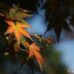 Im Herbst 2 ....