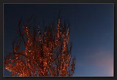 Im Herbst ...