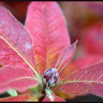 Im Herbst...