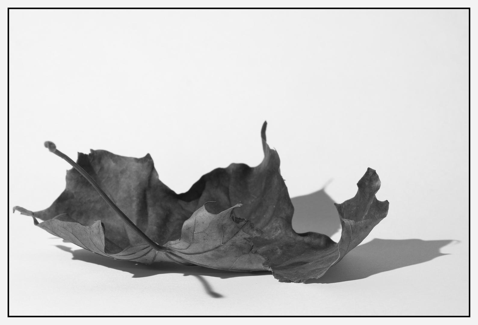 Im Herbst gefallen