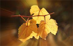 ****Im Herbstkleid****