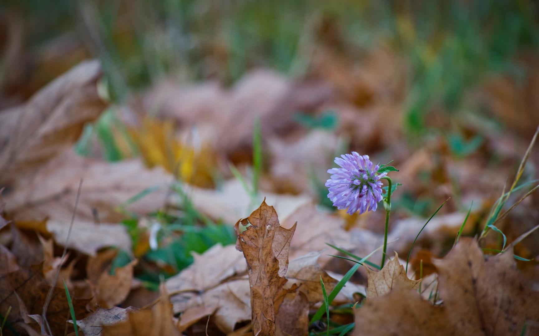 Im Herbstlaub