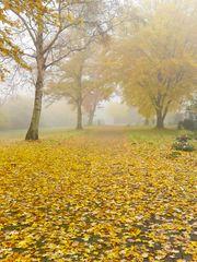 Im Herbstlicht