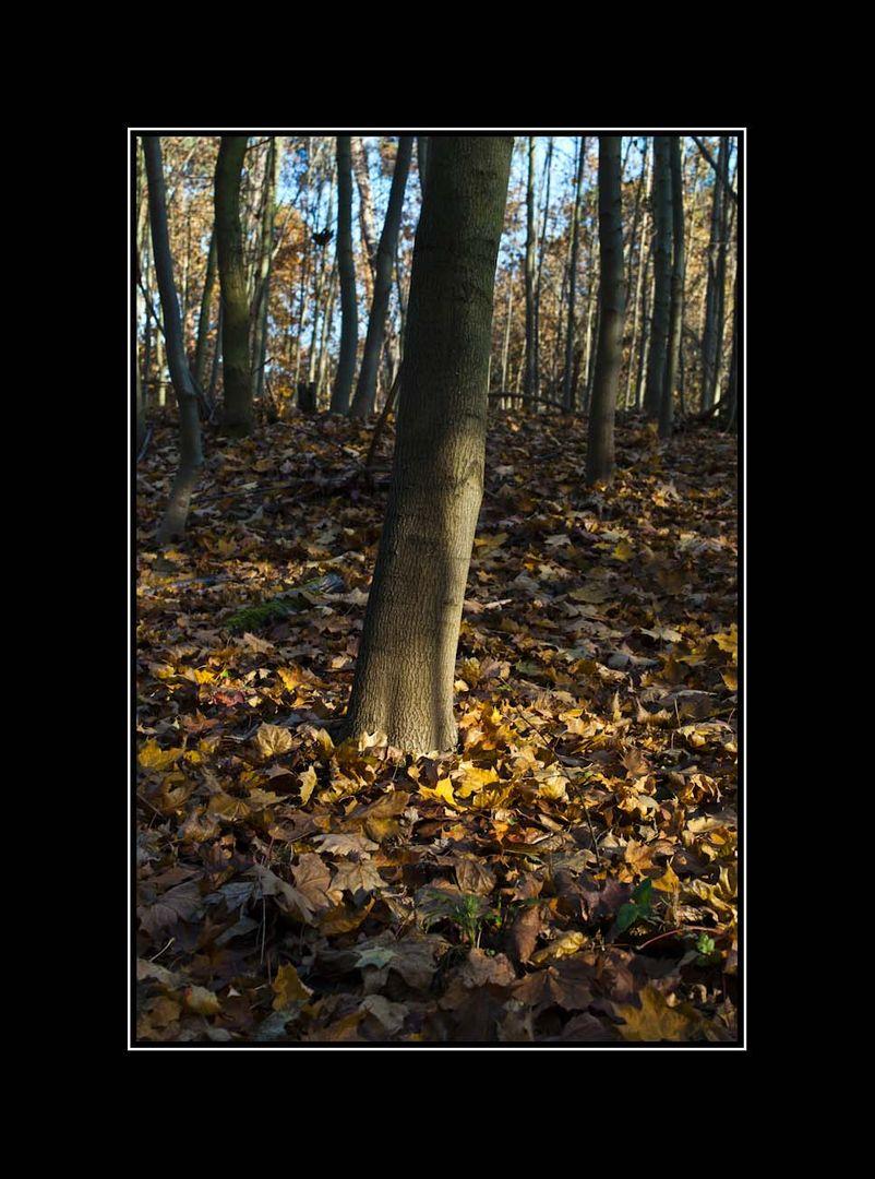 ... im Herbstwald ...