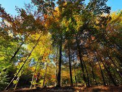 Im Herbstwald ...