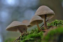 *im Herbstwald*